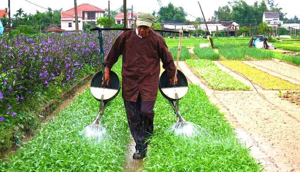 Vietnam Reisen - Manuelle Bewässerung auf dem Bio-Bauernhof (Originalbild Mirango Travel)