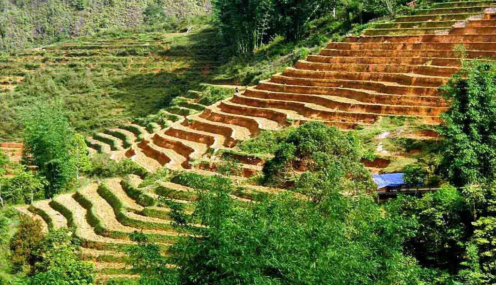 Vietnam Reisen - Reisterrassen von Sapa (Originalbild Mirango Travel)