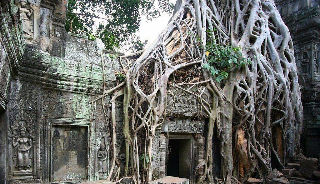 Angkor Wat - Kambodscha Baumwurzeln